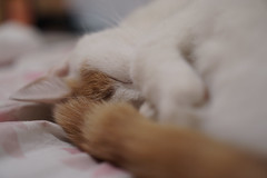 (louis_de_fines) Tags: nice lovely beautiful tired mignon chat cat animal hair roux ginger white snow hear sleep sleeping portrait closer sony a6000 ilce 35mm f18 18 oss nap goodnight