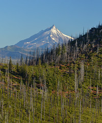 (PCL Photo) Tags: mtjefferson deschutesnationalforesst mountain oregon pacificnorthwest snow glacier view ridgeline cascades volcano trees green framed bestangle