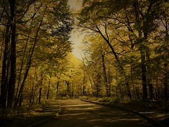 Fall Colors (Anton Shomali - Thank you for over 2 million views) Tags: 2018 fall2018 park road trees tree usa illinois cookcounty busesforestpreserve walk piketrail pike path colors fallcolors fall colorspath trail busse forest nature preserve near chicago