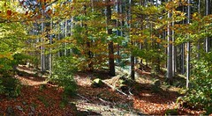 Herbst.Wald (cu♥re di marmo) Tags: wood colourful autumn leaves trees wald bayern bavaria herbst bunteblätte