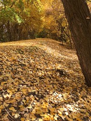IMG_2799 (August Benjamin) Tags: provo provoriver provorivertrail fall utah mountains provocanyon fallcolors autumn trees leaves orem utahvalley jogging