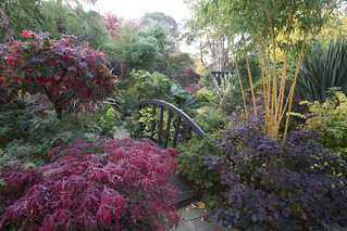 Colours of autumn in our oriental middle garden
