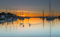 Quay Swans (nicklucas2) Tags: christchurch quay river stour sunrise buoy yacht isleofwight water swan bird contrail