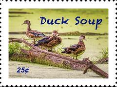 Duck Soup - 25¢ (Wes Iversen) Tags: commercetownship hss michigan roberthlongnaturepark sliderssunday tamron150600mm birds ducks stamps waterfowl wildlife painterly