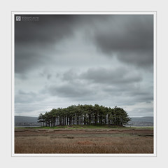 Trees (Stuart Leche) Tags: clouds gowerpeninsula landscape outdoor outdoorphotography sky stuartleche trees wales woodland wwwstuartlechephotography