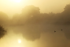 Golden Pond, Somerset Levels, Ian Wade (Disorganised Photographer - Ian Wade - Travel, Wil) Tags: somerset levels golden light dawn mist misty fof frost landscape