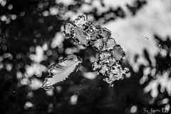 DN9A5889-2 (Josette Veltman) Tags: herfst autumn bos forest vechtdal overijssel