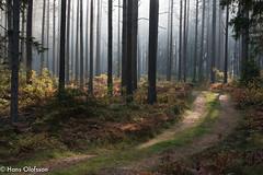 Svartingtorpsskogen (Hans Olofsson) Tags: bird foto höst natur nature skammelstorp stefan viltkamera gamecamera skogen åtelkamera unlimitedphotos environment miljö