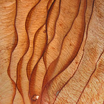 Leaf detail - Détail de feuille thumbnail