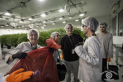 CanopyTweedSM_20180914_65 (DawnOne) Tags: cnopy growth corporation tweed inc smiths falls ontario canada copyright linda dawn hammond indyfoto dawnone weed cannabis marijuana marihuana employees working sorting buds leaves separating security happy workers mother room hershey hersheys chocolate factory former employee visitor lobby lab coat entrance grass growing premises grow op