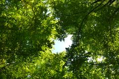 Bad Urach (mireiatarres) Tags: arboles forest trees leaves hojas verde green bosque wald autum herbst