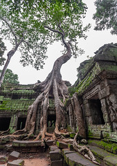 Ta Prohm temple overgrown with tree roots, Siem Reap Province, Angkor, Cambodia (Eric Lafforgue) Tags: abandoned ancientcivilisation angkor angkorwat apsara archaeology architecture artscultureandentertainment asia beautyinnature buddhism buddhist builtstructure cambodia colourimage environment famousplace history indochina khmer lush majestic monument nopeople oldruin outdoors rediscovered religion root ruin southeastasia spirituality temple templebuilding tetramelesnudiflora traditionallycambodian tranquility travel traveldestinations tree unescoworldheritagesite vertical wat yasodharapura camboimg9652 siemreapprovince