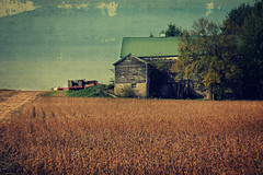 Harvest Time (Dave Linscheid) Tags: soybeans barn rural country garm agriculture texture textured field truck butterfield minnesotausa picmonkey
