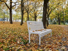 Bench Surrounded by Leaves (docwiththecamera) Tags: autumn leaf leaves color sky ground tree bench park colourful peace fall alone
