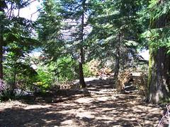2006. Blowdown. Lake of the Woods, Oregon. (USDA Forest Service) Tags: usda usfs forestservice stateandprivateforestry foresthealthprotection region6 r6 centraloregonservicecenter centraloregoninsectanddiseaseservicecenter centraloregonforestinsectanddiseaseservicecenter lakeofthewoods hazardtree dangertree blowdown 2006 kristenchadwick foresthealth pacificnorthwestregion decay forestdisease forestpathogen