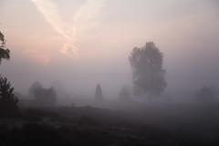 Morgennebel (Gret B.) Tags: morgen morning morgens morgennebel morgendämmerung nebel lüneburgerheide