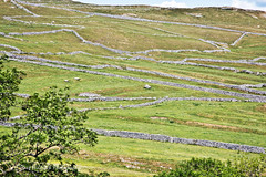 If Only Walls Could Talk (Dave Hilditch Photography) Tags: yorkshire yorkshiredales dales walls stone drystonewalls landscapes trees fields