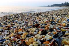 IMG_0001x (gzammarchi) Tags: italia paesaggio natura mare ravenna lidodidante alba conchiglia