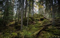 Urskog-3804 (jarud) Tags: 2018 norge norway notodden urskog