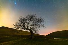 The Frandy Tree Under The Stars (Uillihans Dias) Tags: night nature travel photoshop lightroom startrail green trees sky nightexposure stars scotland britain d750 samyang samyang14mmf28