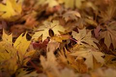 (mari_anneb) Tags: syksy autumn nikkor105mm
