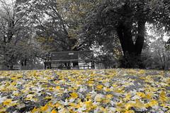 autumn leaves (bndocksaints_kenny) Tags: ma cemetery graveyard october hingham photography