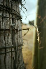 Wire (Stueyman) Tags: sony a7 a7ii zeiss batis batis225 25mm perth wa westernaustralia au australia