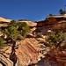 Coming Up to Slick Rock Canyon Wall (Canyonlands National Park)