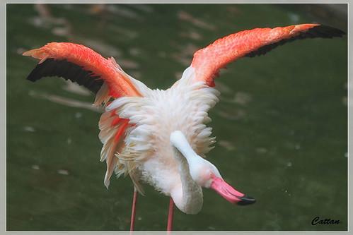 Flamingos - Kowloon Park, Hong Kong