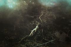Untitled (brach26c) Tags: fineart forest bosque carlosbrachophotography carlosbracho conceptual concept panama surreal sony sonya6000