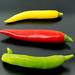 Bunte scharfe Parpikaschoten in grün, rot und gelb auf einem schwarzen Teller in der Nahaufnahme