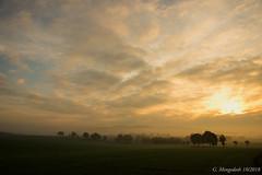 Morgennebel (günter mengedoth) Tags: hdpentaxda1685mmf3556eddcwr hd pentaxda 1685mm f3556 ed dc wr pentax pentaxk3 nebel morgen landschaft baum feld himmel wolken