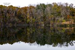 still water ... (mariola aga) Tags: autumn fall lake trees reflection water stillness serenity landscape nature coth coth5