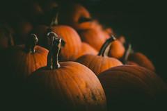 Happy Halloween 🎃 (Emma Yeardley) Tags: halloween autumn pumpkins pumpkinpatch fall lowkey orange nikon d7500 40mm closeup pumpkin shropshire besttimeofyear light shadows colourfusion orangeobsession