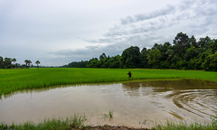 East Baray Viewpoint with Farmer standing in Ricefields in Siem Reap