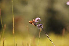 fra le ultime (@5imonapol) Tags: settembre september fall foliage butterfly bug macro bokeh wild flower