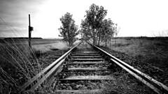 Zug nach Nirgendwo (Maquarius) Tags: bahn schienen schwellen bahnlinie stillgelegt bäume mainfranken unterfranken franken lülsfeld