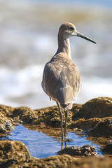 Private Pool (dianne_stankiewicz) Tags: tidalpool pool private nature wildlife feathers coastal california lagunabeach