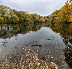 Sherdley Park (Steve Samosa Photography) Tags: autumn sthelens england unitedkingdom gb park