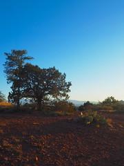 P6309745 (carriemoranphotos) Tags: arizona sedona redrocks trees travel sunrise sunset red usa roadtrip