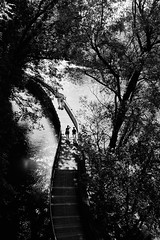 A charming walk at the river (iamunclefester) Tags: münchen munich asatouristinmyhometown street blackandwhite monochrome isar river bridge trees light shadow shadows castshadow hardshadow leaves reflexion sun sunny walk charming manualfocusday manualfocus