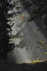 (mariuszpawel) Tags: forest morning nikon nature mazury tree las polska wood drzewa