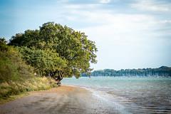 Riverside view (ArrrV) Tags: orwell river tree coast sand nikon d3300