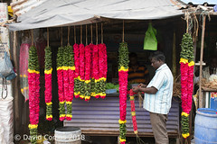 Chennai - Kapaleeshwarar Temple (CATDvd) Tags: भारतगणराज्य repúblicadelaindia repúblicadelíndia republicofindia índia india bhāratgaṇarājya nikond7500 august2018 catdvd davidcomas httpwwwdavidcomasnet httpwwwflickrcomphotoscatdvd chennai madras madrás madràs meṭrās txennai சென்னை மெட்ராஸ் tamilnadu tamiḻnāṭu தமிழ்நாடு portrait retrat retrato kapaleeshwarartemple