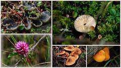 Small things... (Jasper NP, Canada) (armxesde) Tags: pentax ricoh k3 canada kanada jasper jaspernationalpark rockymountains alberta pilz mushroom