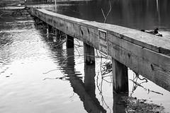 Flooded park in Virginia (SweetCreek) Tags: flooding rivers parkinglot park hurricanes hurricane devastated water run off florence michael usa america virginia rain