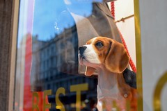 Regent St. 18oct18 (richardbw9) Tags: london uk westminster city street urban regentstreet shop window windowdisplay model statue glass reflection streetshot streetphoto streetphotography fashion commerce marketin dog beagle