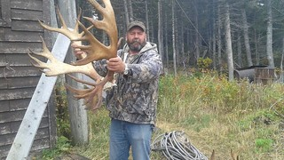 Newfoundland Caribou Hunt, Moose, Bear Hunting 28