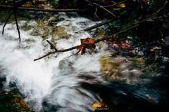 Fall, November 2018 (Andrea Lanzilli) Tags: leicaq leica q 28mm f17 summilux abruzzo italy forest fall autumn stroll walk love myregion