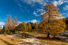 Winter will soon arrive in the alps (moritzgyssler) Tags: autumn lainair lärchen landscape herbst llamd engadin scuol unterengadin larch tree tarasp